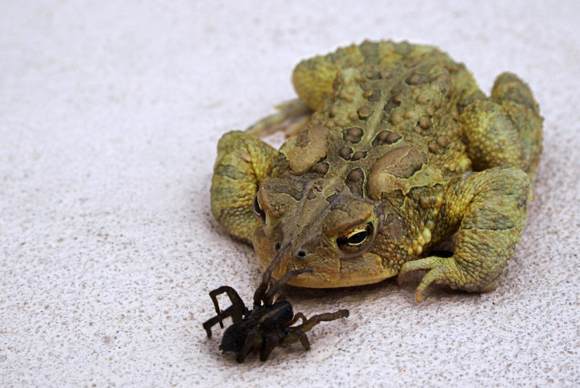 frog and spider retouched